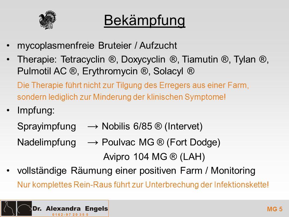 Bekämpfung mycoplasmenfreie Bruteier / Aufzucht Therapie: Tetracyclin ®, Doxycyclin ®, Tiamutin ®, Tylan ®, Pulmotil AC ®, Erythromycin ®, Solacyl ® D
