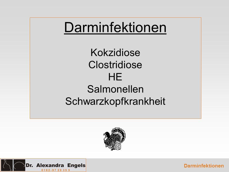 Darminfektionen Kokzidiose Clostridiose HE Salmonellen Schwarzkopfkrankheit Darminfektionen