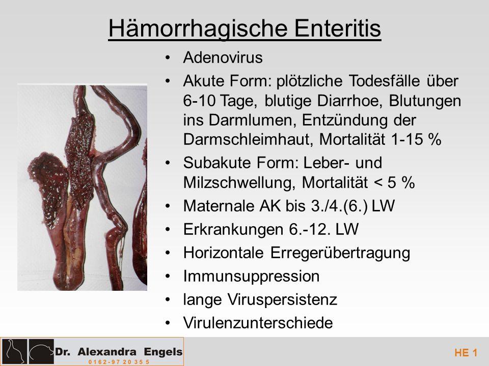 Hämorrhagische Enteritis Adenovirus Akute Form: plötzliche Todesfälle über 6-10 Tage, blutige Diarrhoe, Blutungen ins Darmlumen, Entzündung der Darmsc
