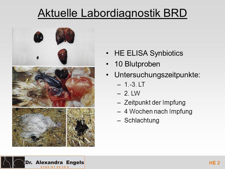 Aktuelle Labordiagnostik BRD HE ELISA Synbiotics 10 Blutproben Untersuchungszeitpunkte: –1.-3. LT –2. LW –Zeitpunkt der Impfung –4 Wochen nach Impfung