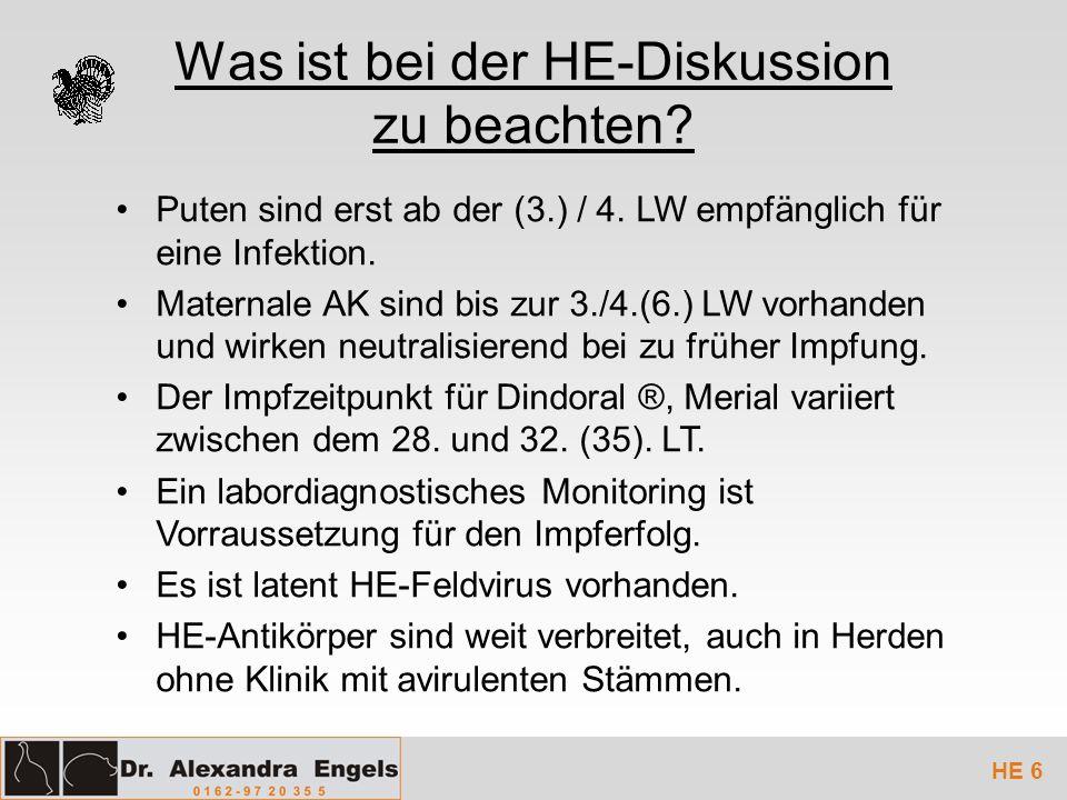 Was ist bei der HE-Diskussion zu beachten? Puten sind erst ab der (3.) / 4. LW empfänglich für eine Infektion. Maternale AK sind bis zur 3./4.(6.) LW