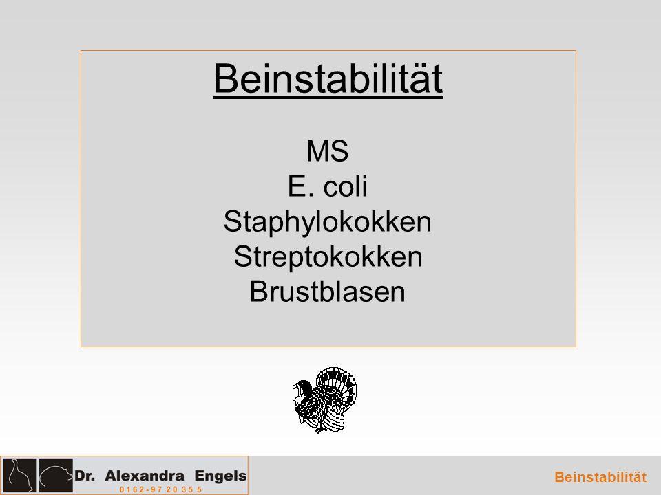 Beinstabilität MS E. coli Staphylokokken Streptokokken Brustblasen Beinstabilität