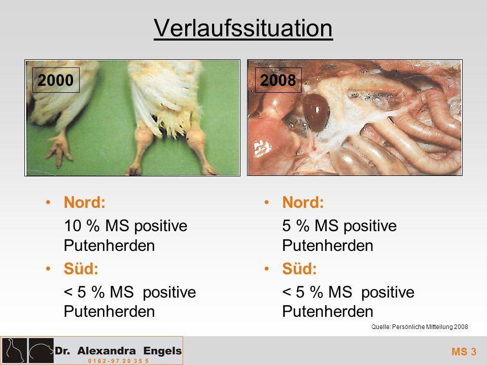 Verlaufssituation MS 3 Nord: 10 % MS positive Putenherden Süd: < 5 % MSpositive Putenherden 2008 Quelle: Persönliche Mitteilung 2008 Nord: 5 % MS posi