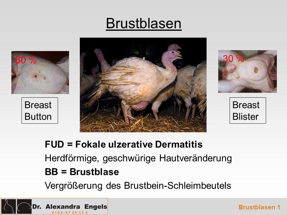Brustblasen Brustblasen 1 FUD = Fokale ulzerative Dermatitis Herdförmige, geschwürige Hautveränderung BB = Brustblase Vergrößerung des Brustbein-Schle