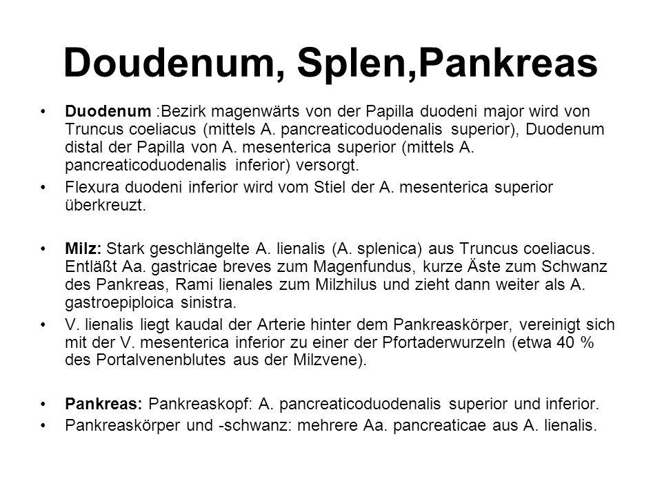 Doudenum, Splen,Pankreas Duodenum :Bezirk magenwärts von der Papilla duodeni major wird von Truncus coeliacus (mittels A. pancreaticoduodenalis superi