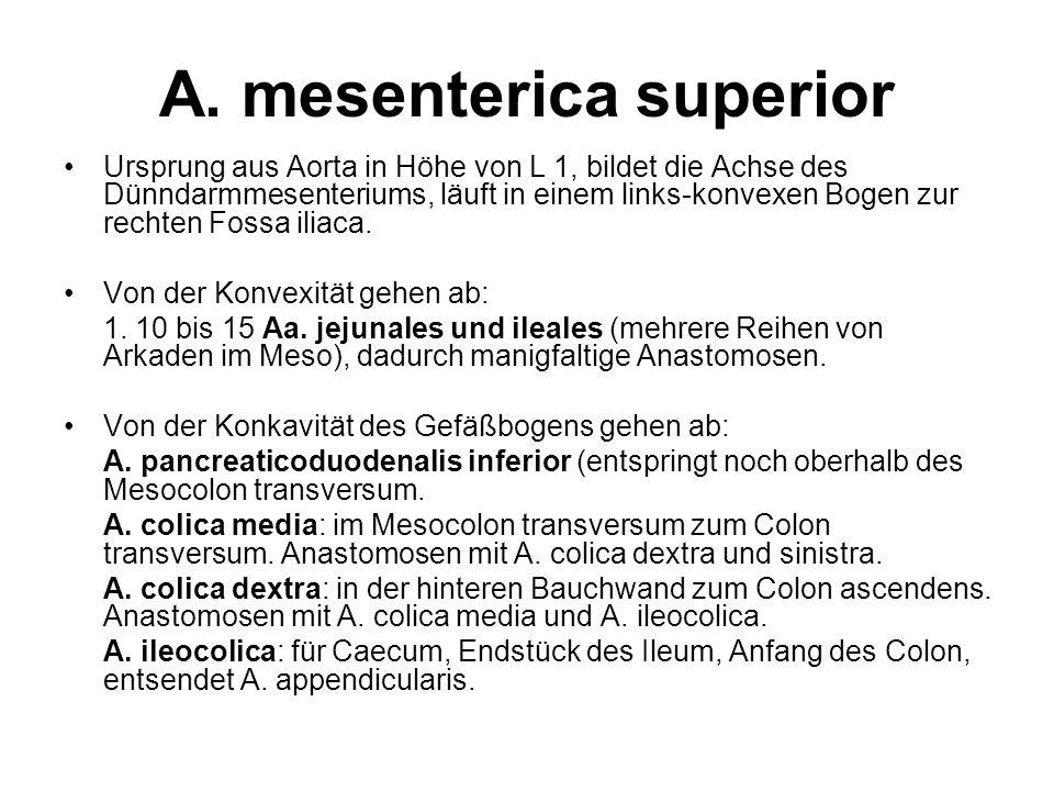 A. mesenterica superior Ursprung aus Aorta in Höhe von L 1, bildet die Achse des Dünndarmmesenteriums, läuft in einem links-konvexen Bogen zur rechten