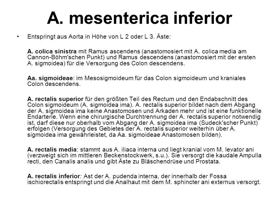 A. mesenterica inferior Entspringt aus Aorta in Höhe von L 2 oder L 3. Äste: A. colica sinistra mit Ramus ascendens (anastomosiert mit A. colica media