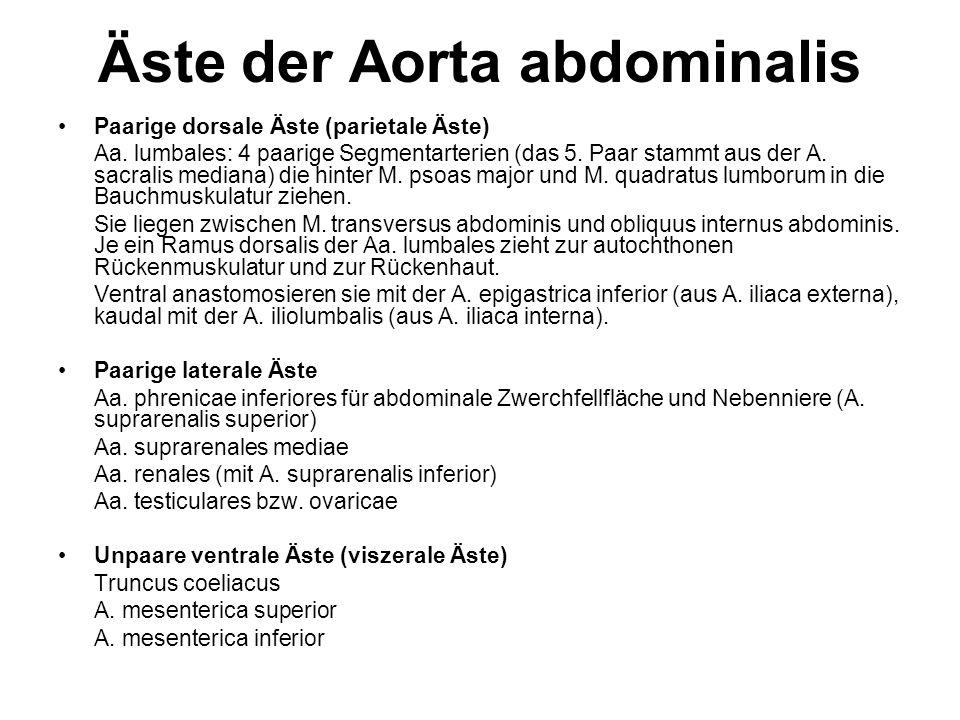 Äste der Aorta abdominalis Paarige dorsale Äste (parietale Äste) Aa. lumbales: 4 paarige Segmentarterien (das 5. Paar stammt aus der A. sacralis media
