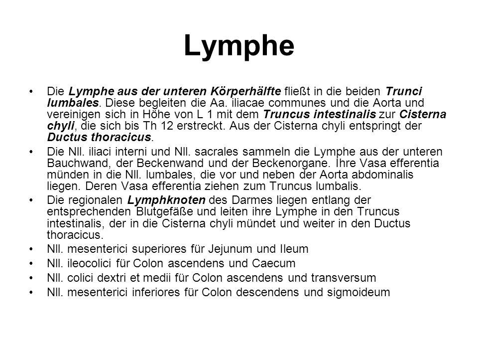Lymphe Die Lymphe aus der unteren Körperhälfte fließt in die beiden Trunci lumbales. Diese begleiten die Aa. iliacae communes und die Aorta und verein