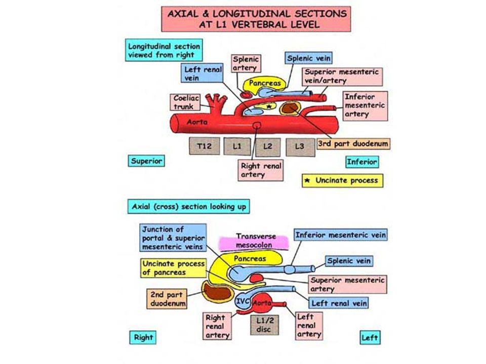 Pfortaderkreislauf Vena portae entsteht durch Zusammenfluß von V.