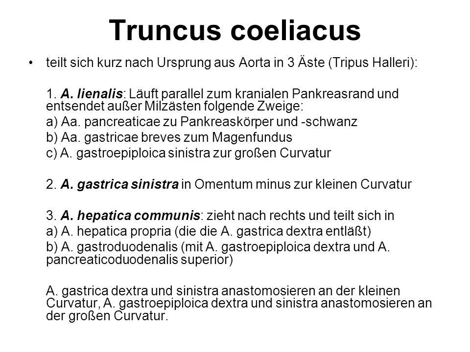Truncus coeliacus teilt sich kurz nach Ursprung aus Aorta in 3 Äste (Tripus Halleri): 1. A. lienalis: Läuft parallel zum kranialen Pankreasrand und en