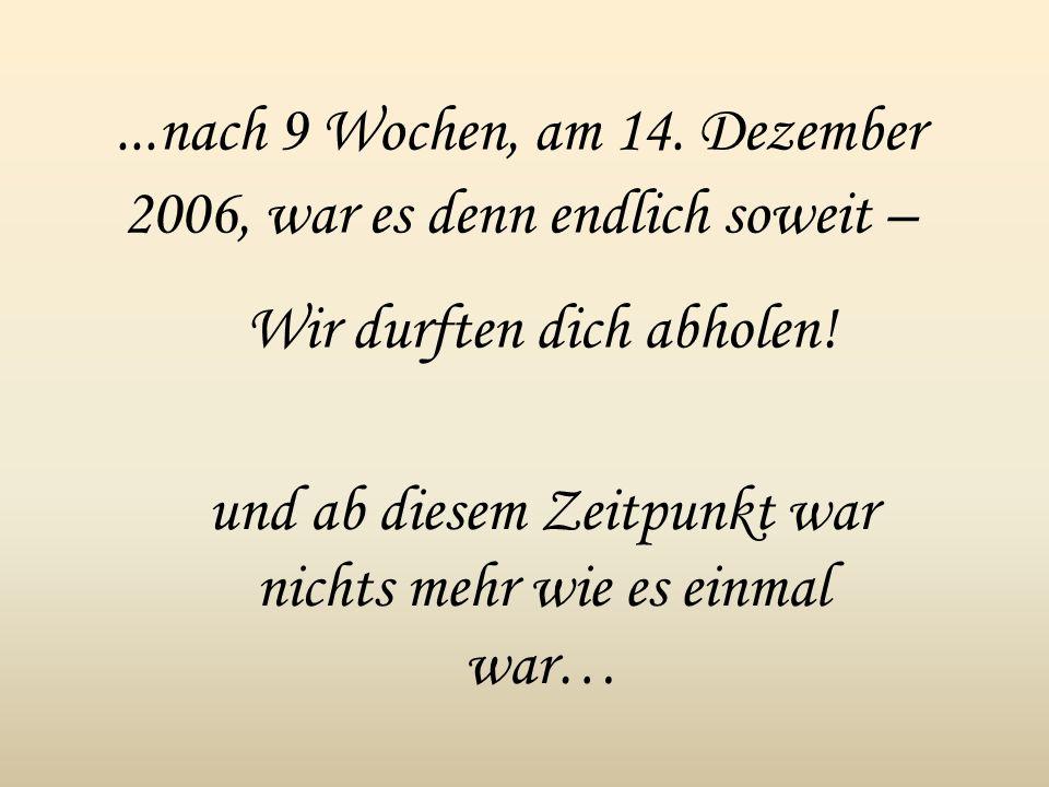 ...nach 9 Wochen, am 14. Dezember 2006, war es denn endlich soweit – Wir durften dich abholen! und ab diesem Zeitpunkt war nichts mehr wie es einmal w