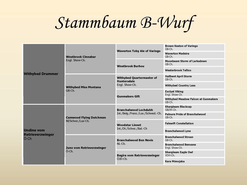 Stammbaum B-Wurf