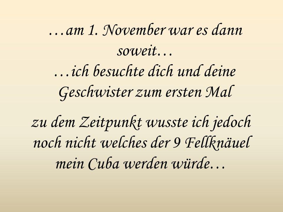 …am 1. November war es dann soweit… …ich besuchte dich und deine Geschwister zum ersten Mal zu dem Zeitpunkt wusste ich jedoch noch nicht welches der