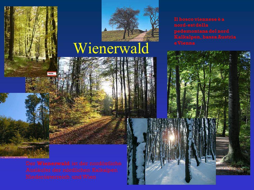 Wienerwald Der Wienerwald ist der nordöstliche Ausläufer der nördlichen Kalkalpen Niederösterreich und Wien Il bosco viennese è a nord-est della pedemontana del nord Kalkalpen, bassa Austria e Vienna