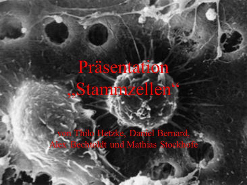 Präsentation Stammzellen von Thilo Hetzke, Daniel Bernard, Alex Bechtoldt und Mathias Stockhofe