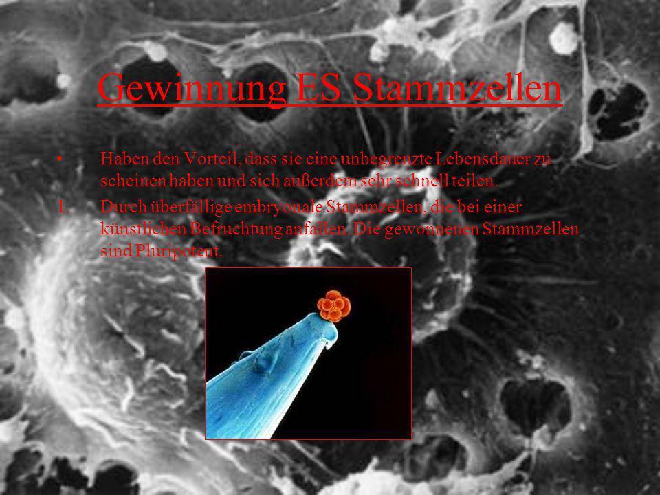 Gewinnung ES Stammzellen Haben den Vorteil, dass sie eine unbegrenzte Lebensdauer zu scheinen haben und sich außerdem sehr schnell teilen. 1.Durch übe