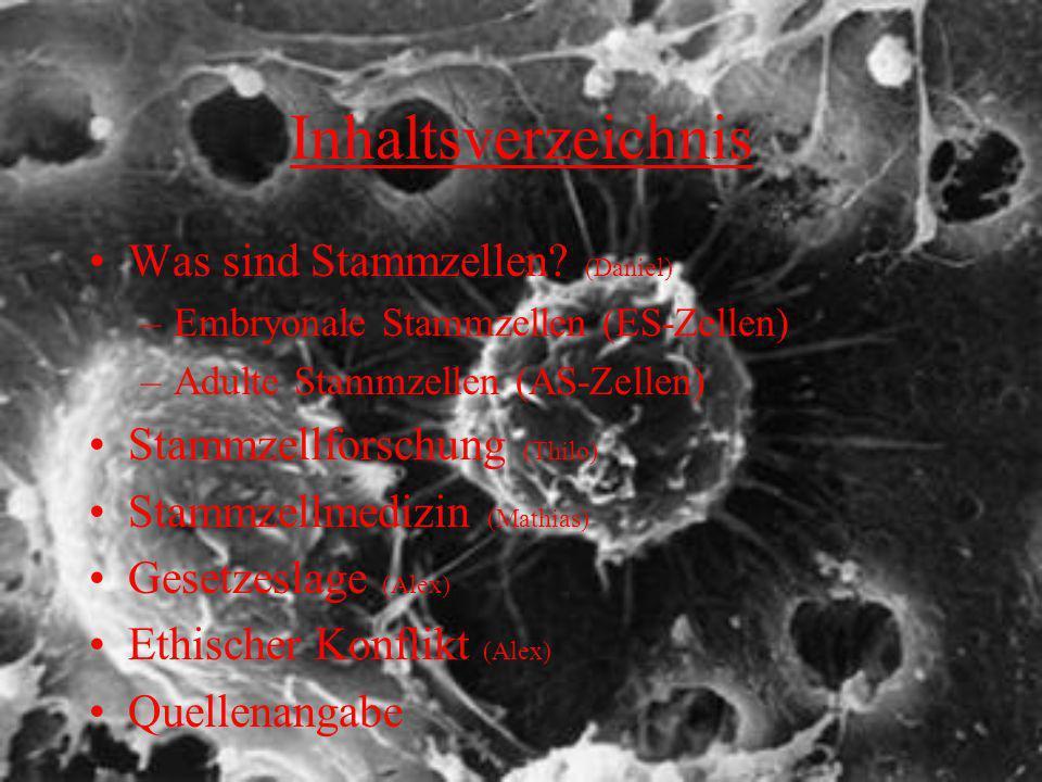 Inhaltsverzeichnis Was sind Stammzellen? (Daniel) –Embryonale Stammzellen (ES-Zellen) –Adulte Stammzellen (AS-Zellen) Stammzellforschung (Thilo) Stamm