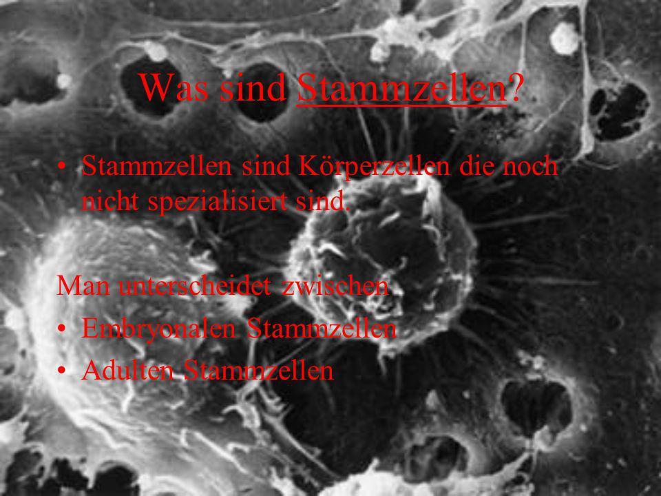 Was sind Stammzellen? Stammzellen sind Körperzellen die noch nicht spezialisiert sind. Man unterscheidet zwischen Embryonalen Stammzellen Adulten Stam