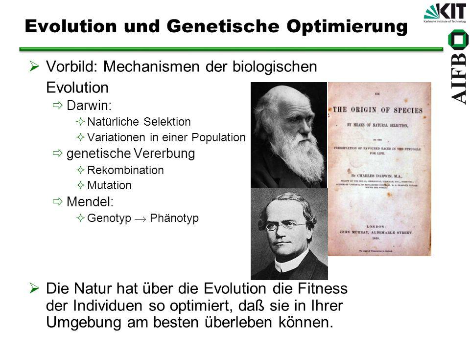 Evolution und Genetische Optimierung Vorbild: Mechanismen der biologischen Evolution Darwin: Natürliche Selektion Variationen in einer Population genetische Vererbung Rekombination Mutation Mendel: Genotyp Phänotyp Die Natur hat über die Evolution die Fitness der Individuen so optimiert, daß sie in Ihrer Umgebung am besten überleben können.