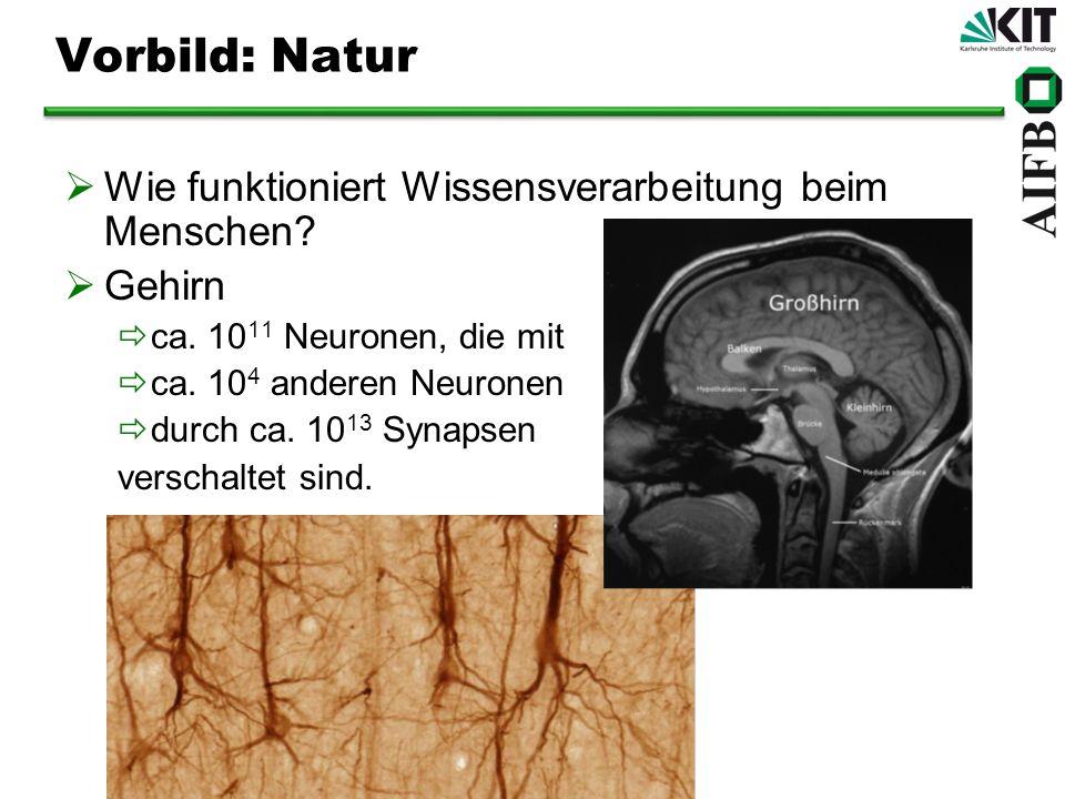 Vorbild: Natur Wie funktioniert Wissensverarbeitung beim Menschen? Gehirn ca. 10 11 Neuronen, die mit ca. 10 4 anderen Neuronen durch ca. 10 13 Synaps