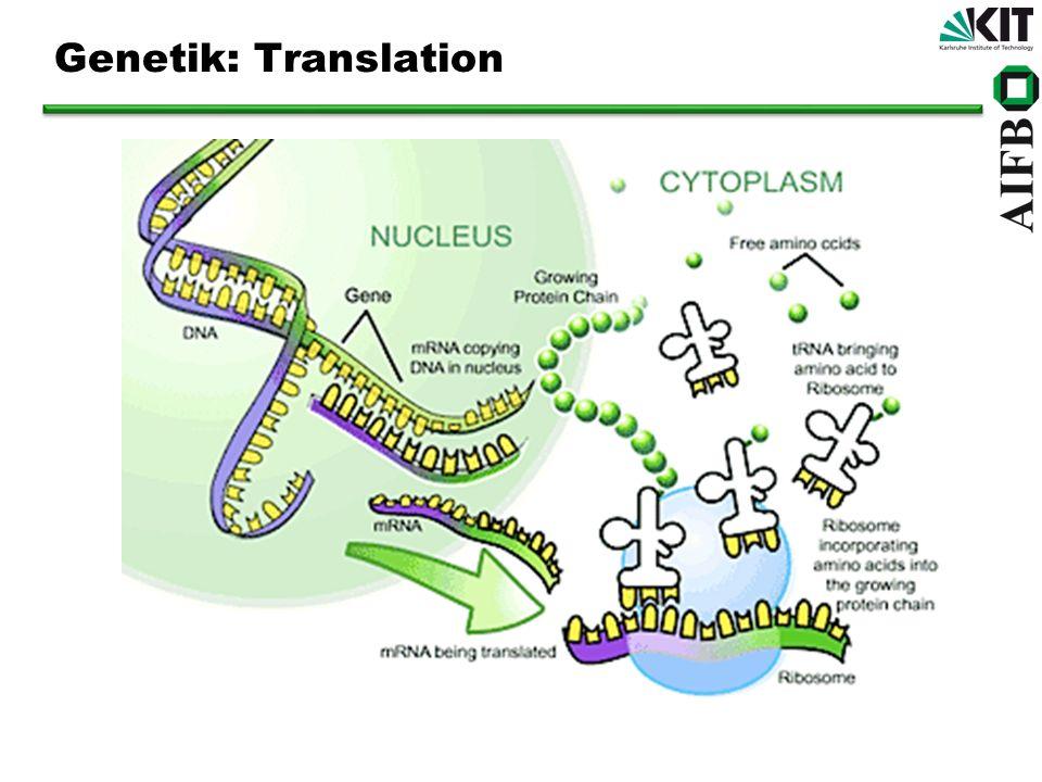 Genetik: Translation