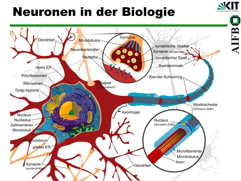 Neuronen abstrahiert Dendriten Zellkörper Summieren Axon