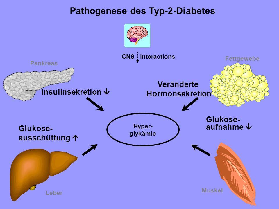 Hyper- glykämie Pankreas Leber Muskel Pathogenese des Typ-2-Diabetes Insulinsekretion Glukose- ausschüttung Glukose- aufnahme CNS Interactions Fettgew