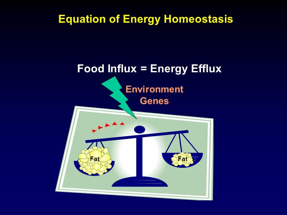 Equation of Energy Homeostasis Food Influx = Energy Efflux Fat Environment Genes