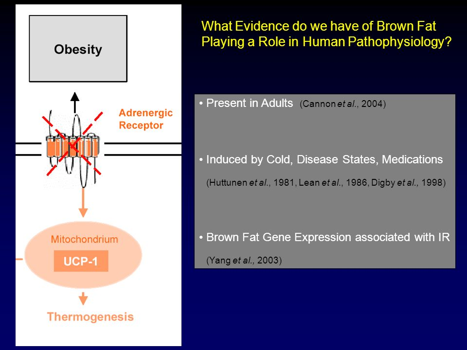 What Evidence do we have of Brown Fat Playing a Role in Human Pathophysiology? Present in Adults (Cannon et al., 2004) Induced by Cold, Disease States