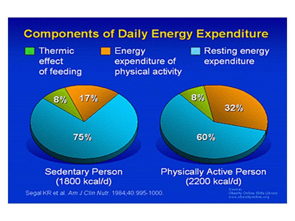 Funktionen des Fettgewebes Insulinsensitivität Energiespeicherung Adrenerge Sensitivität Energieabgabe (Lipolyse, Thermogenese)