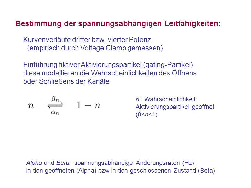 Bestimmung der spannungsabhängigen Leitfähigkeiten: Kurvenverläufe dritter bzw. vierter Potenz (empirisch durch Voltage Clamp gemessen) Einführung fik