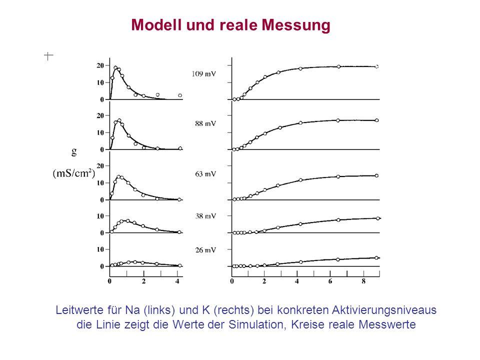 Leitwerte für Na (links) und K (rechts) bei konkreten Aktivierungsniveaus die Linie zeigt die Werte der Simulation, Kreise reale Messwerte Modell und