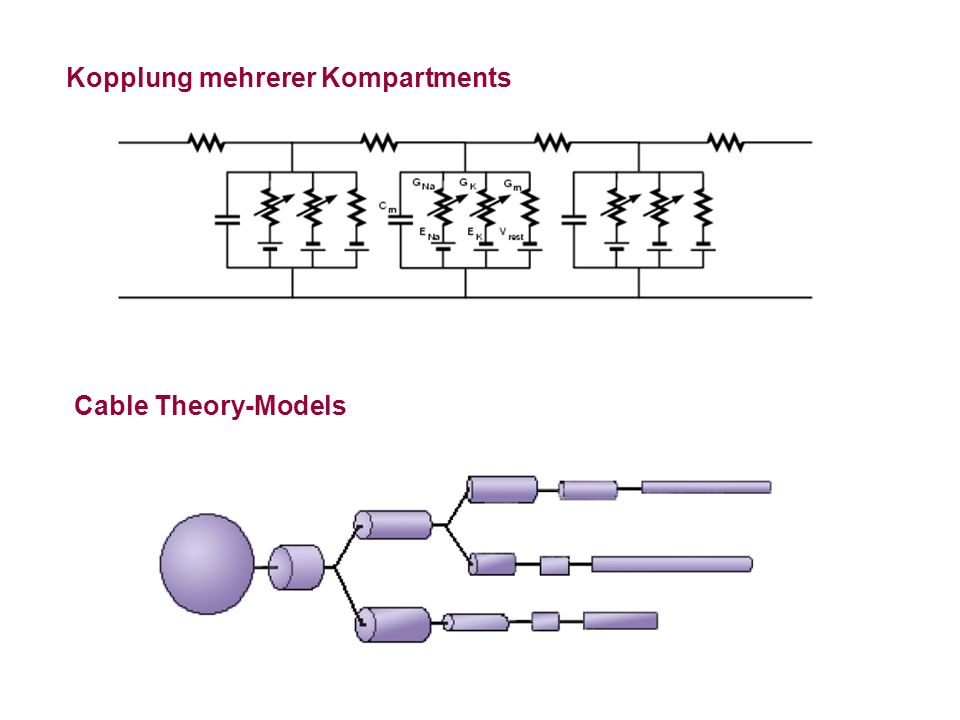 Cable Theory-Models Kopplung mehrerer Kompartments
