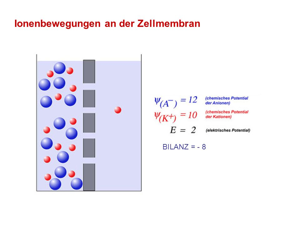 Ionenbewegungen an der Zellmembran BILANZ = - 8