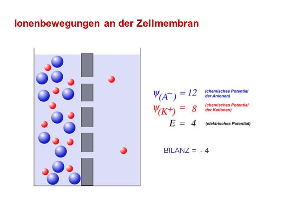 Ionenbewegungen an der Zellmembran Ruhepotential für Kalium erreicht BILANZ = 0