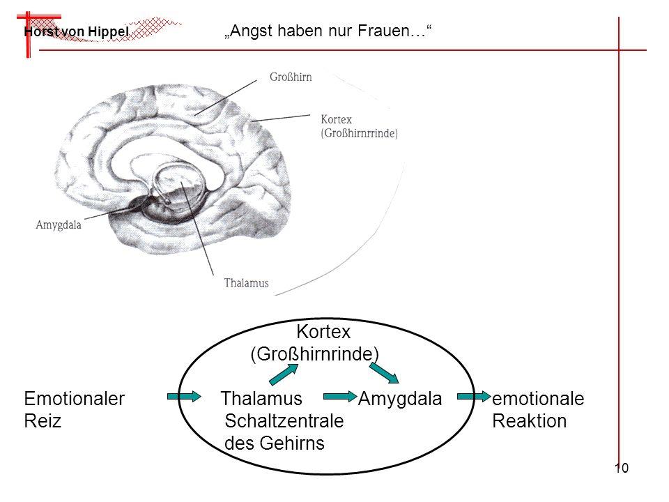 10 Horst von Hippel Angst haben nur Frauen… Kortex (Großhirnrinde) Emotionaler ThalamusAmygdalaemotionale ReizSchaltzentraleReaktion des Gehirns