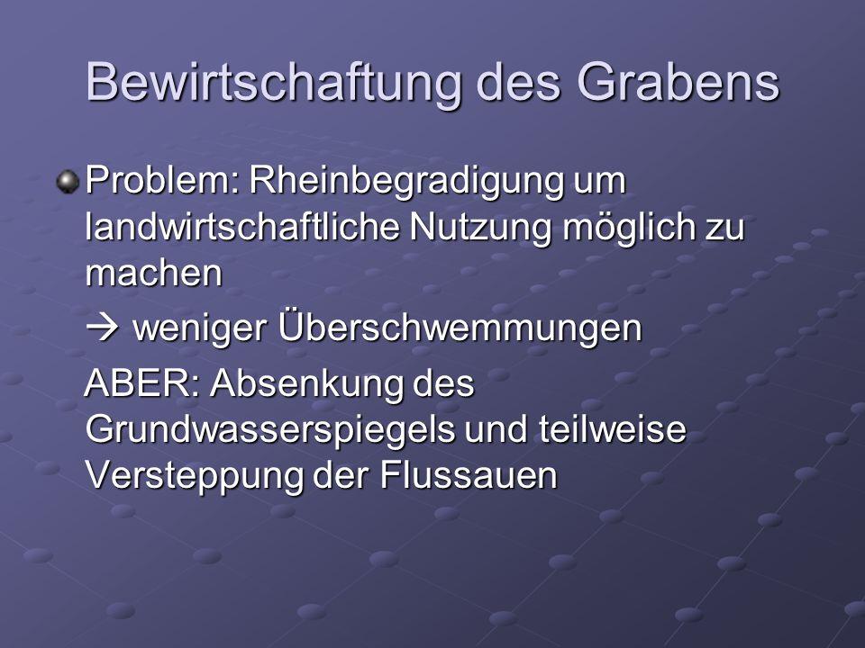 Bewirtschaftung des Grabens Problem: Rheinbegradigung um landwirtschaftliche Nutzung möglich zu machen weniger Überschwemmungen weniger Überschwemmungen ABER: Absenkung des Grundwasserspiegels und teilweise Versteppung der Flussauen ABER: Absenkung des Grundwasserspiegels und teilweise Versteppung der Flussauen
