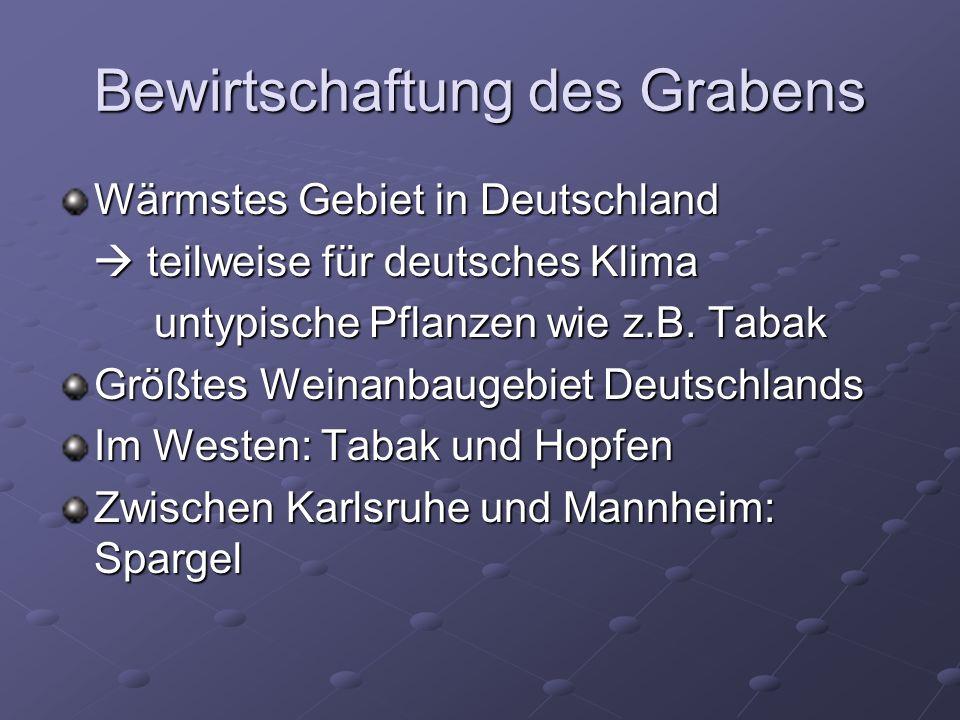 Bewirtschaftung des Grabens Wärmstes Gebiet in Deutschland teilweise für deutsches Klima teilweise für deutsches Klima untypische Pflanzen wie z.B.