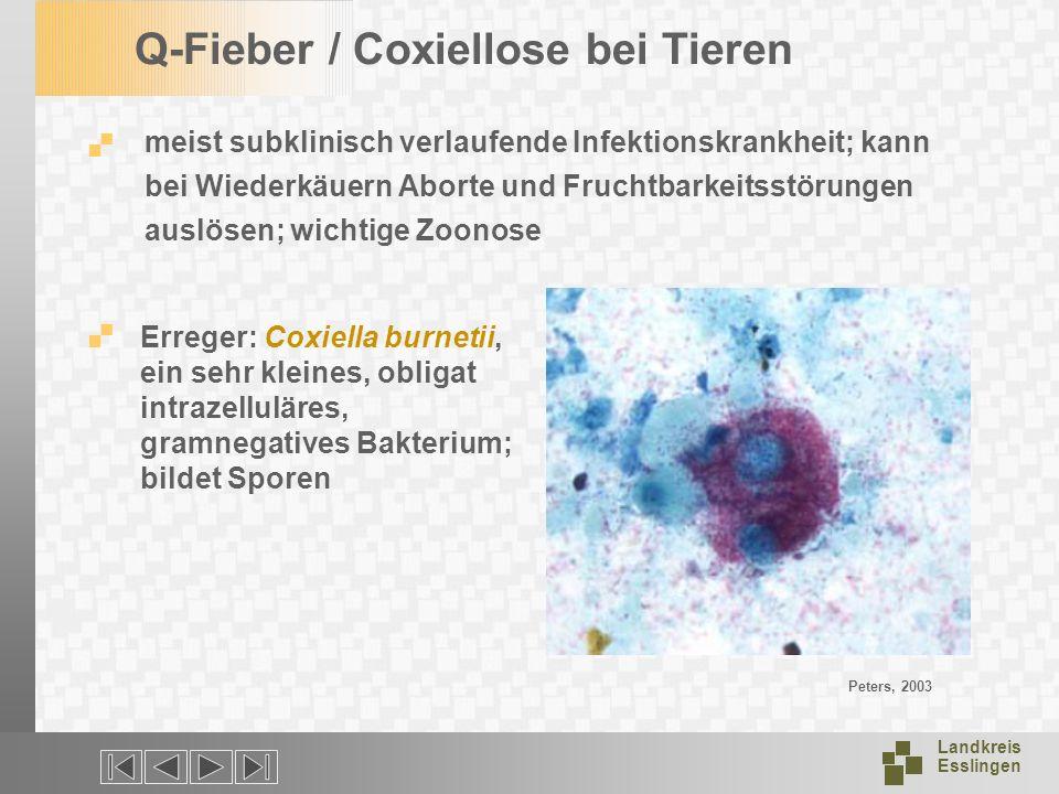 Landkreis Esslingen Q-Fieber / Coxiellose bei Tieren meist subklinisch verlaufende Infektionskrankheit; kann bei Wiederkäuern Aborte und Fruchtbarkeit