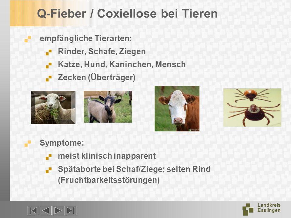 Landkreis Esslingen Q-Fieber / Coxiellose bei Tieren empfängliche Tierarten: Rinder, Schafe, Ziegen Katze, Hund, Kaninchen, Mensch Zecken (Überträger)