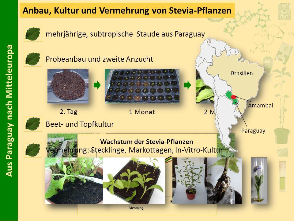 Aus Paraguay nach Mitteleuropa Anbau, Kultur und Vermehrung von Stevia-Pflanzen Probeanbau und zweite Anzucht Beet- und Topfkultur 2. Tag 1 Monat2 Mon
