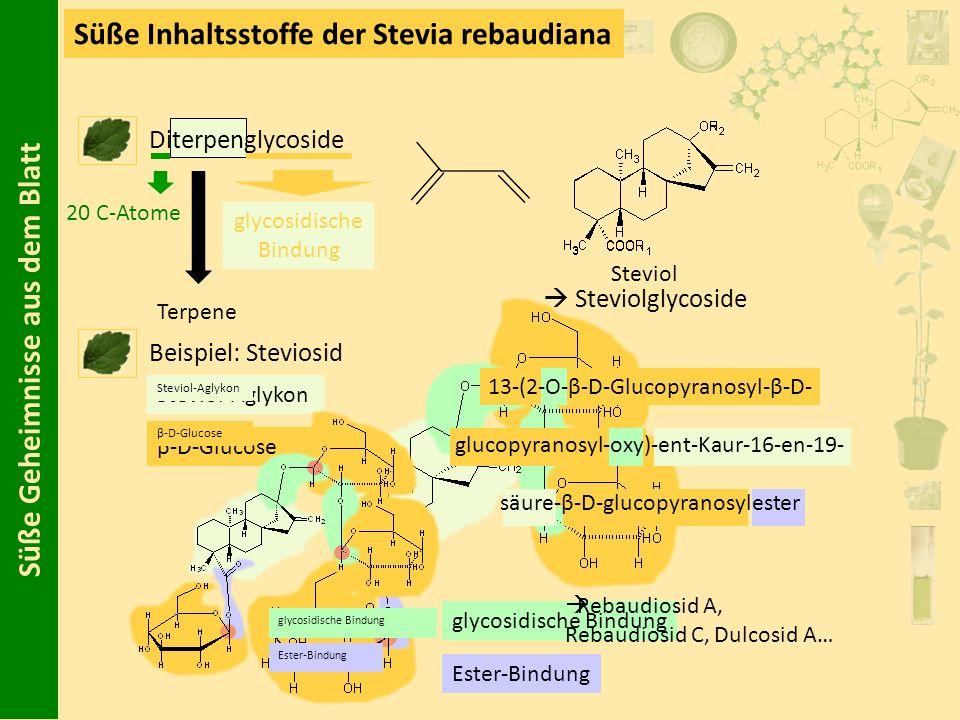 Süße Geheimnisse aus dem Blatt Süße Inhaltsstoffe der Stevia rebaudiana Diterpenglycoside Beispiel: Steviosid 20 C-Atome glycosidische Bindung Terpene