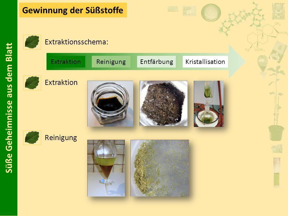 Süße Geheimnisse aus dem Blatt Gewinnung der Süßstoffe Extraktionsschema: Extraktion Reinigung ExtraktionReinigungEntfärbungKristallisation