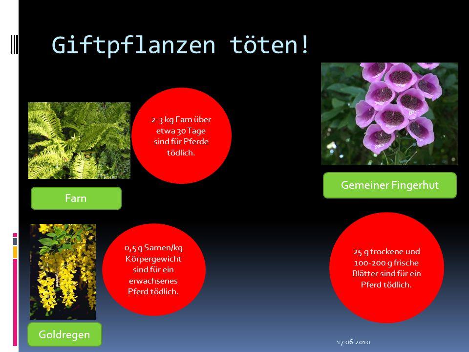 Giftpflanzen töten! 17.06.2010 Farn Goldregen Gemeiner Fingerhut 2-3 kg Farn über etwa 30 Tage sind für Pferde tödlich. 0,5 g Samen/kg Körpergewicht s