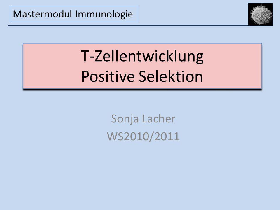 T-Zellentwicklung Positive Selektion Sonja Lacher WS2010/2011 Mastermodul Immunologie