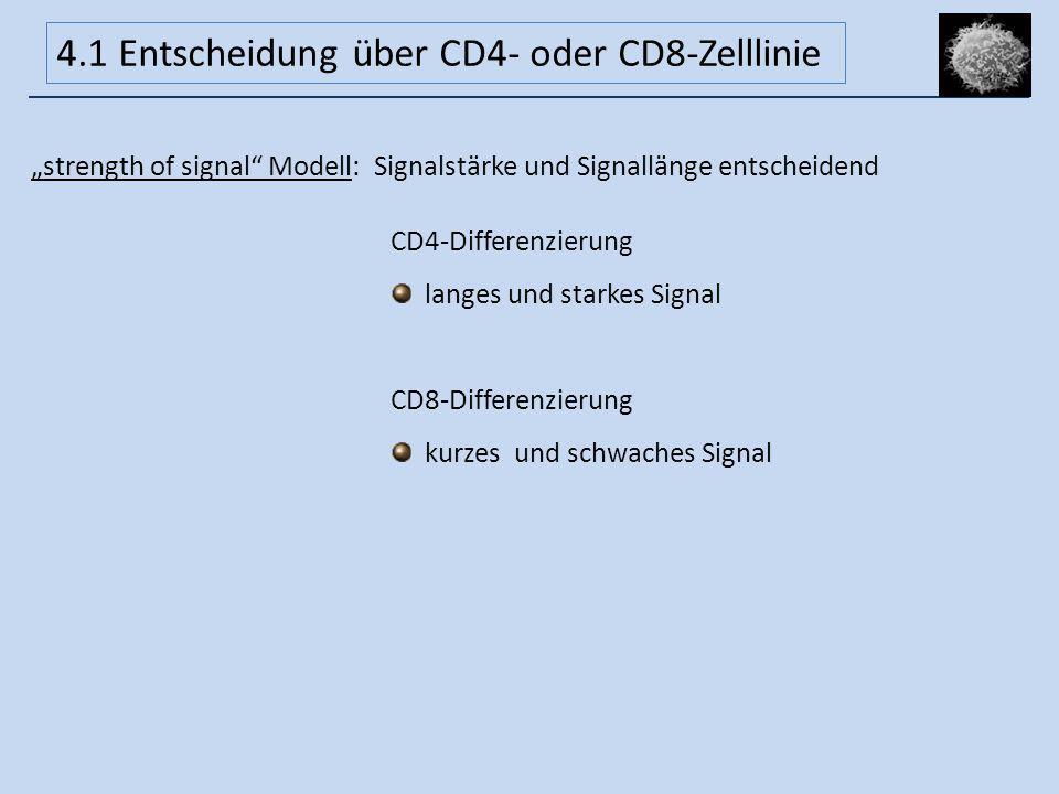 strength of signal Modell: Signalstärke und Signallänge entscheidend CD4-Differenzierung langes und starkes Signal CD8-Differenzierung kurzes und schw
