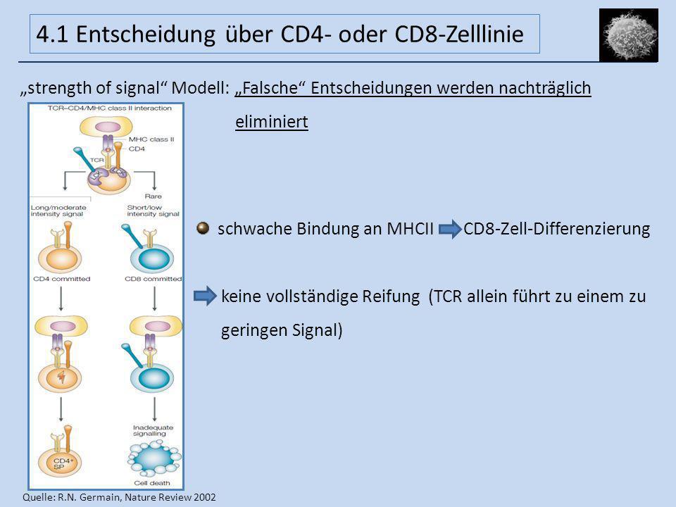 strength of signal Modell: Falsche Entscheidungen werden nachträglich eliminiert schwache Bindung an MHCII CD8-Zell-Differenzierung keine vollständige
