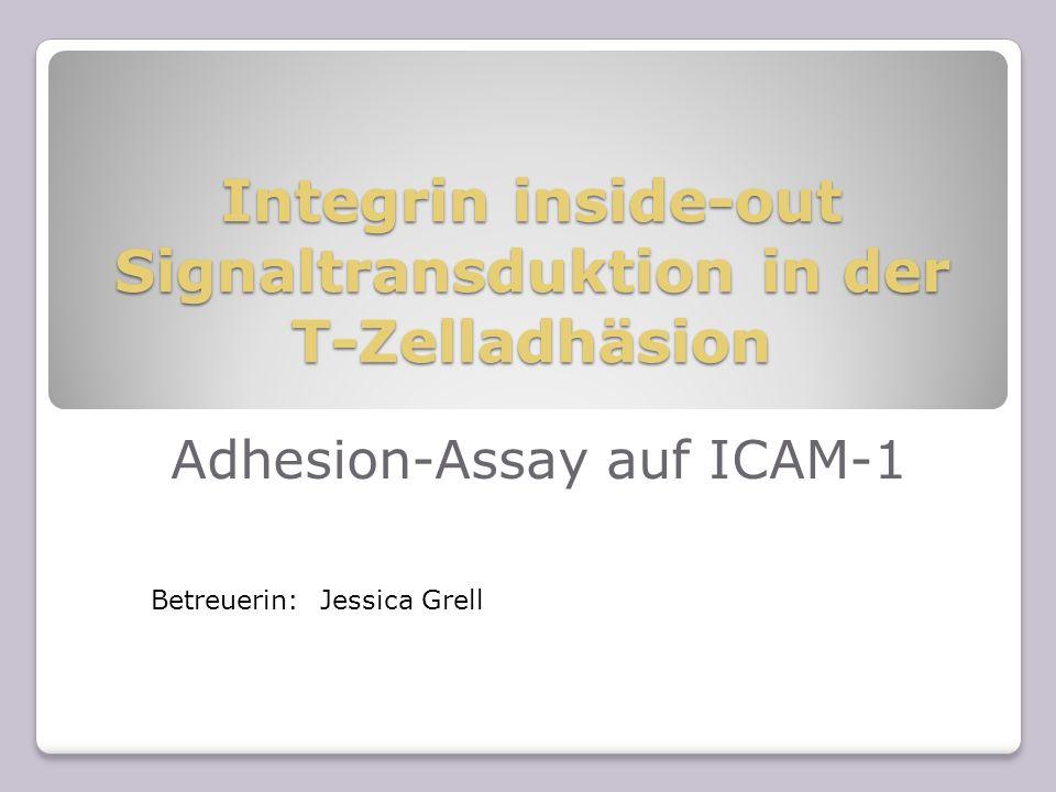 Integrin inside-out Signaltransduktion in der T-Zelladhäsion Adhesion-Assay auf ICAM-1 Betreuerin: Jessica Grell