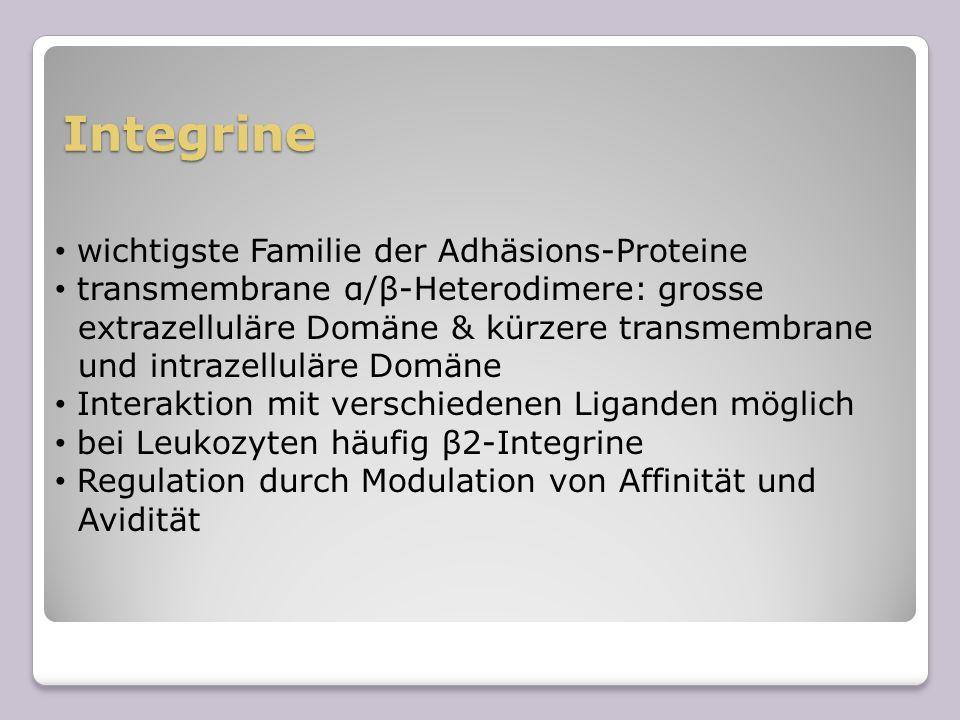 Integrine wichtigste Familie der Adhäsions-Proteine transmembrane α/β-Heterodimere: grosse extrazelluläre Domäne & kürzere transmembrane und intrazell